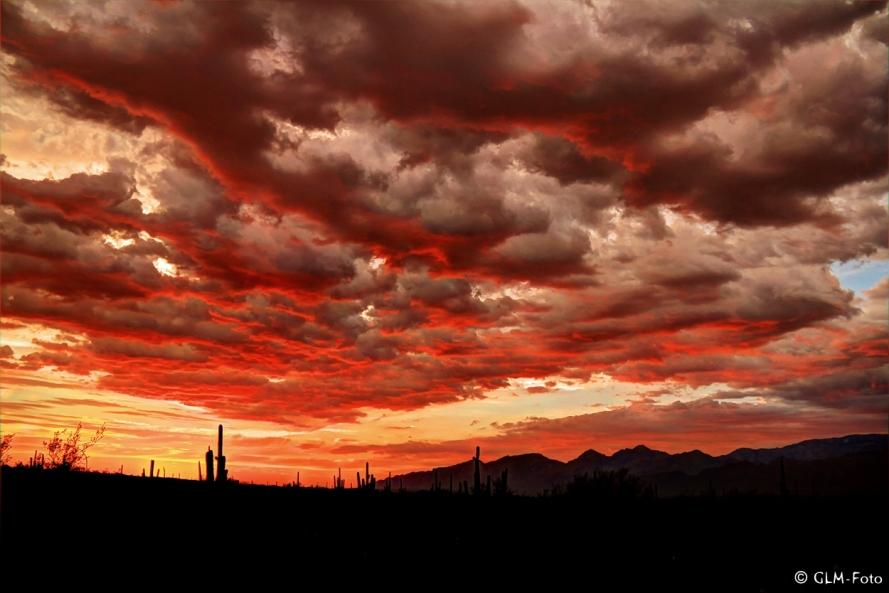 AZ-2012-07-27-Saguaro-NM_399