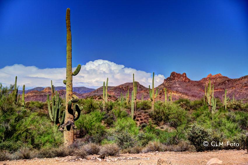 AZ-2012-07-27_Apache-Trail_155